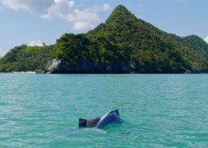 Khanom dolphins
